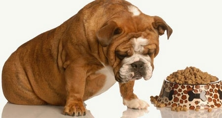 Feeding too much bones makes dog become anorexic