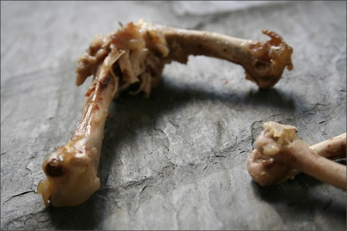 In fact, deer bone is not quite good for dogs.