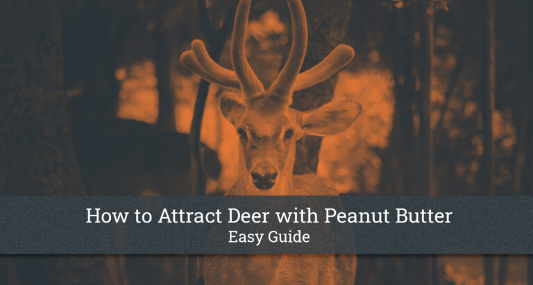 How to Attract Deer with Peanut Butter