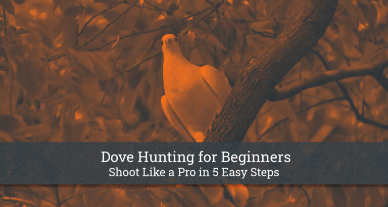 Dove Hunting For Beginners: Shoot Like a Pro in 5 Easy Steps